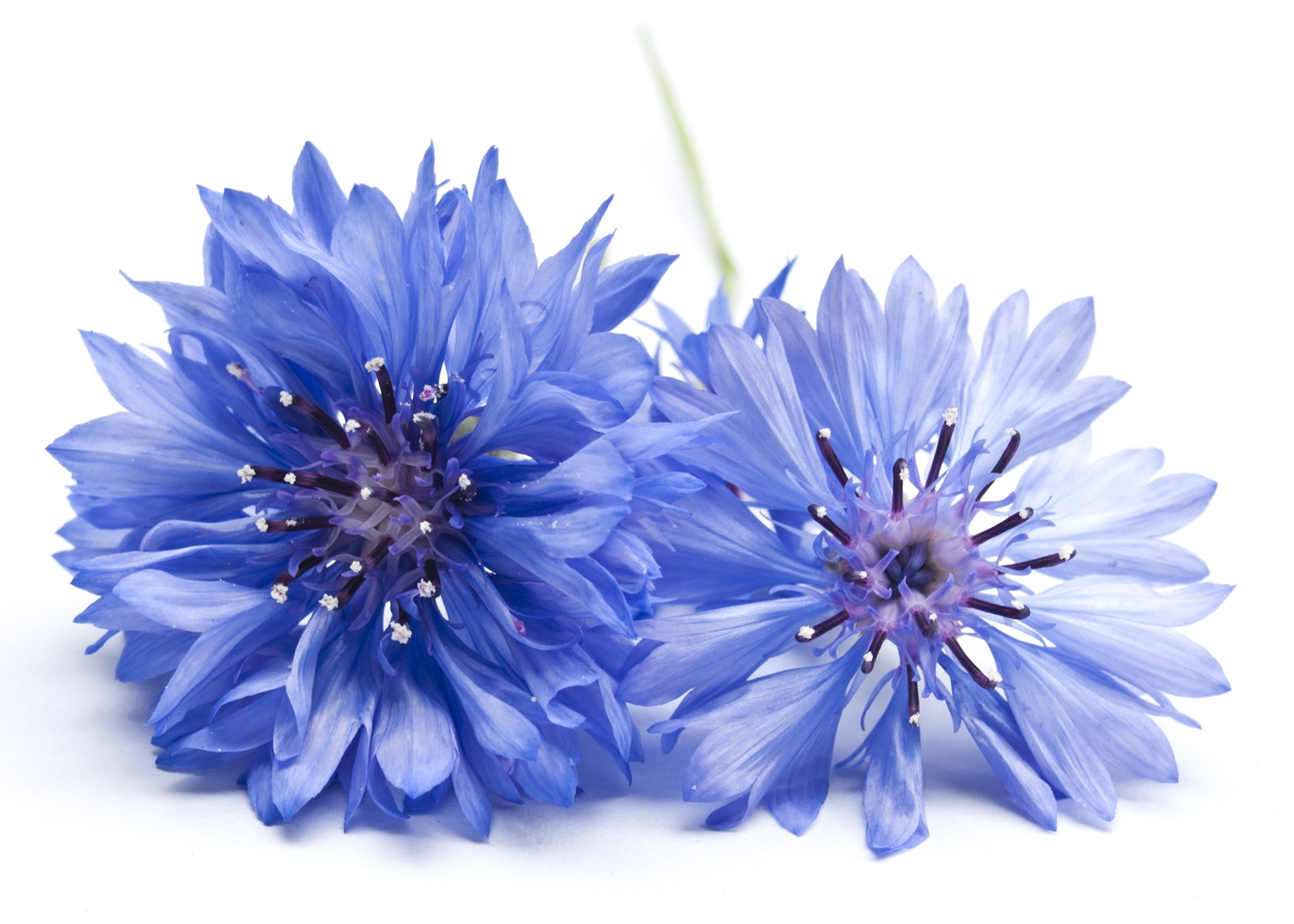 belle oemine eau florale bio bleuet 200ml. Black Bedroom Furniture Sets. Home Design Ideas